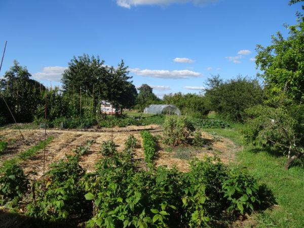 Jardin bio en proximité des cuisines