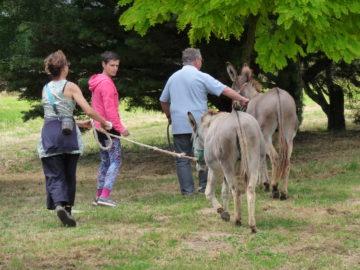 Promenade des ânes