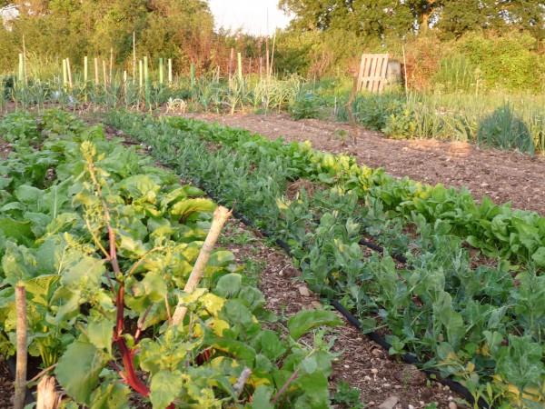 Jardin : potager à o km des cuisines