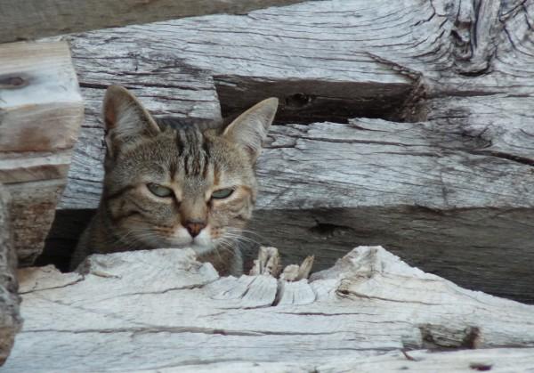 Michuan notre chatte